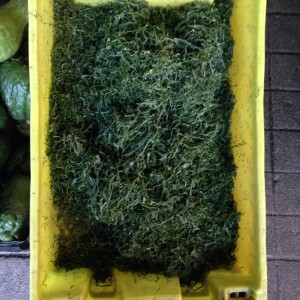 Készül a Caldo Verde